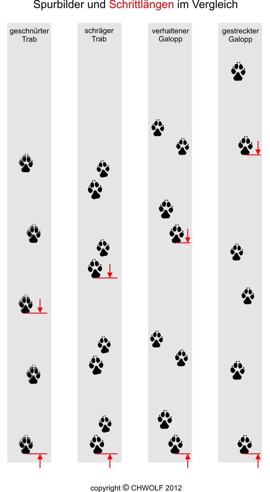 http://chwolf.org/assets/graphics/content/woelfe-kennenlernen/Spurbilder_Schrittlaengen.jpg